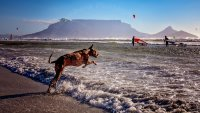 Theme 2: Beach Activities - Hein Beukes - I want to fly