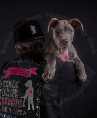 Theme 2: Cats & Dogs - Hein Beukes - Great Dane Resque